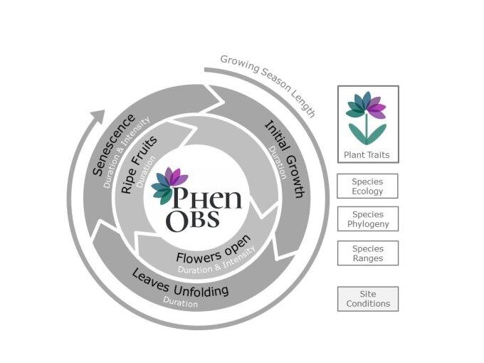 PhenObs Diagramm